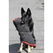 Дрессировка собак фото