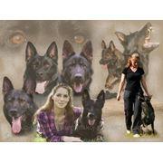 Дрессировка собак всех пород. фото