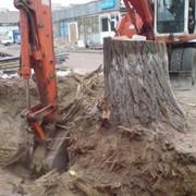 Выкорчевывание деревьев фото