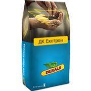 Насіння ріпака Монсанто DK Extron, міш фото