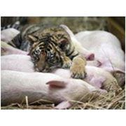 Экскурсия в Новомосковск с посещением зоопарка в с. Хащевом. фото