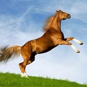 Услуги конно-спортивные фото