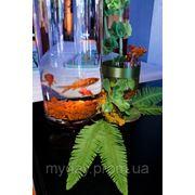 Композиции на гостевые столы Рыбки фото