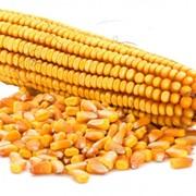 Кукуруза (навал,мешок,биг бэг) фото