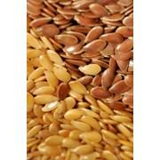 Семена масличных культур, лен от производителя фото