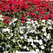 Уход за цветниками фото