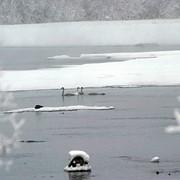 Зимний экологический туризм фото