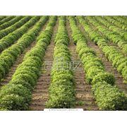 Выращивание овощей фруктов ягод фото