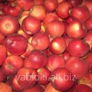 Продам Яблоки сорта Глостер из Молдавии фото