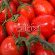 Помидоры, томаты свежие фото