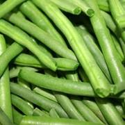 Фасоль зеленая фото