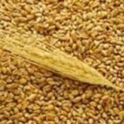 Сельхозпродукция. Зерновые продукты. Купить. Цена. Украина. фото