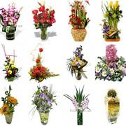 Подбор растений и уход за ними фото