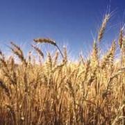 Удобрения минеральные водорастворимы для зерновых фото
