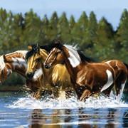 Картина стразами Лошади у воды 40х50 см фото