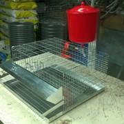Клетка для перепелов на 12 шт. фото