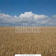 Выращивание сельскохозяйственной продукции, переработка сельхозпродукции. фото