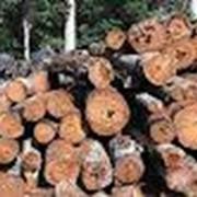 Деревообработка,отходы,фрезы,укпить,цена,недорого, фото