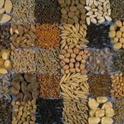 Семена. фото