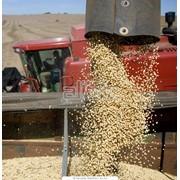 Перевозка зерна и сельхозпродукции фото