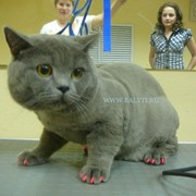 Антицарапки -мягкие коготки для кошек и собак фото