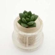 Литл Джем Minicactus брелок с живым растением фото
