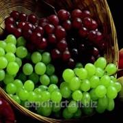 Виноград на экспорт фото
