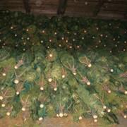 Упакованная елка фото