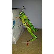 Цветные изолоновые пазлы 3D. Конструкторы для малышей от 3 лет (насекомые, животные в ассорт.) фото