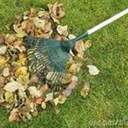 Прочистка от листьев фото
