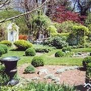 Озеленение садов, г.Донецк фото