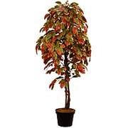 Искусственное дерево Церсис Николь (Код товара: 53896) фото