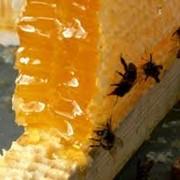 Мед в сотах фото