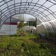 Фермерская (промышленная) теплица фото