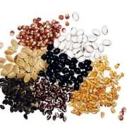Протравители для предпосевной обработки семян сельскохозяйственных культур фото