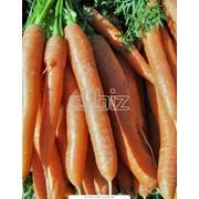 Моркрвь фото