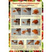 Плакат Нарезка клубне-корнеплодов Г.20 фото