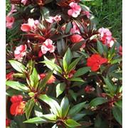 Посадка цветов на месте захоронения с насыпкой плодородной земли фото