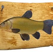 Живая рыба Линь фото