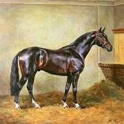 КК-72 гранула для спортивных и работающих лошадей фото