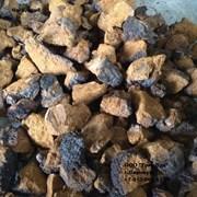 Чага (березовый гриб) фото