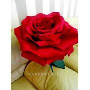 Гигантская роза фото