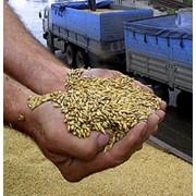 Экспорт зерна фото