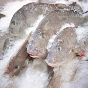 Рыба, Рыба в Казахстане фото