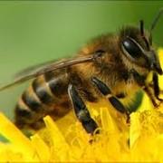 Массовая селекция пчёл цена, Хмельницкая область, Украина фото
