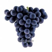 Кишмиш виноград Сезон сбора: август-декабрь фото