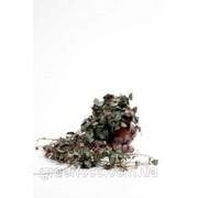 Церопегия Вуда -- Ceropegia Woodii ssp. фото