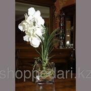 Орхидея ванда Код: A0012 фото