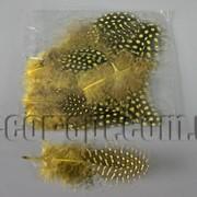 Перья желтые с горохом 5-10 см ~50 шт 570400 фото