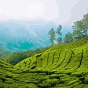 Отдых в Керал фото